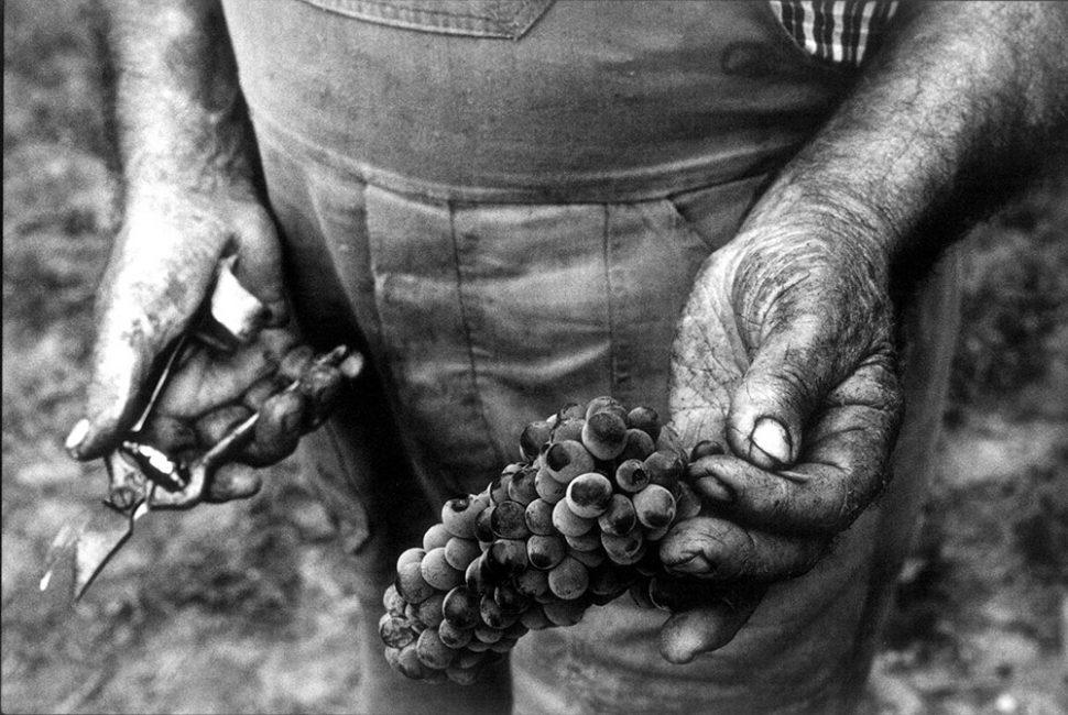 Harvest's hands